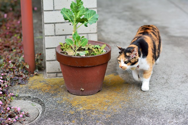 家の門から出てきたネコの写真
