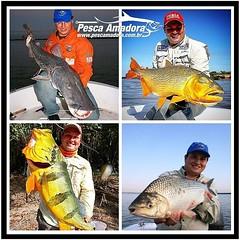 Versátil e bom de pesca, @aledick staff da revista pesca e cia sempre trazendo belas imagens das suas pescarias.  #pescaamadora #pesqueesolte #baitcast #pescaesportiva #sportfishing #fishing #flyfishing #fish #bassfishing #bass #angler #snook #fishinglure