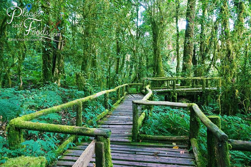 doi inthanon ang ka nature trail platform zig zag
