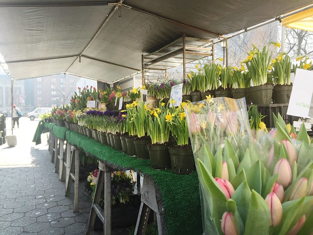 Union Square Greenmarket spring flowers