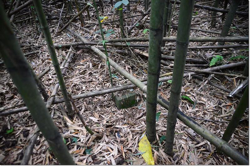 幾乎被竹葉覆蓋的頭人埔山基點