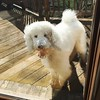"""When you ask your daughter to rinse off the dog's paws, and she decides """"he's already dirty so why not play in the swampy backyard!?"""" #filthybeast #sherlockthespoodle #standardpoodle"""