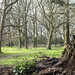 Small photo of Abbots Langley Walk - March 2016 - JPP-3810