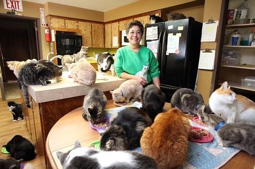 Американка віддала власний будинок котам