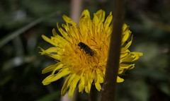 Beetle Escapades