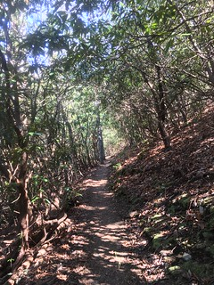 Green tunnel of trail up to Wesser Bald