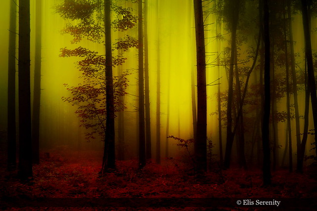 Enlightenment Forest