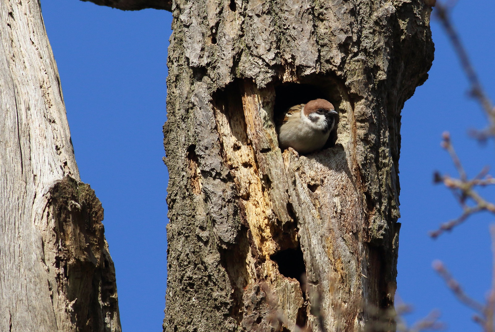 sparrowsetc0127
