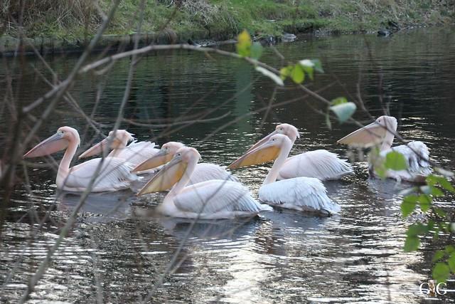 Besuch Zoo Rostock 29.12.201572