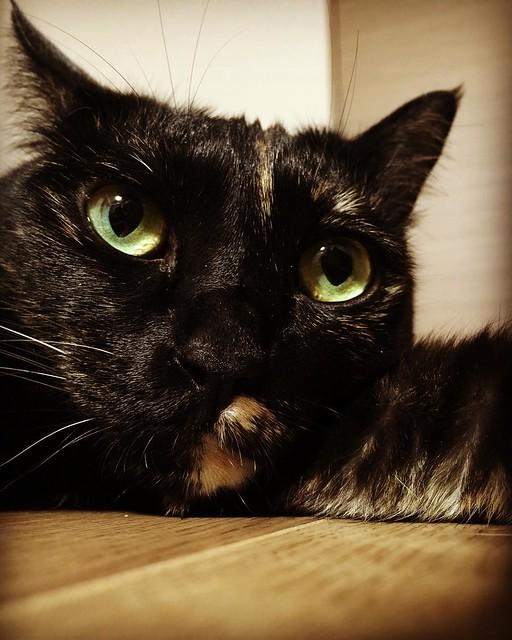 #cat #cats #catsofinstagram #catstagram #instacat #instagramcats #neko #nekostagram #猫 #ねこ #ネコ# #ネコ部 #猫部 #ぬこ #にゃんこ #ふわもこ部