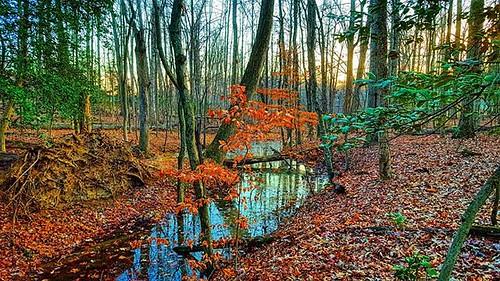 park trees photooftheday naturephotography natureshots picoftheday outdoorlife outdoorwomen uploaded:by=flickstagram exploreva instagram:photo=114749451625714446238433534 instagram:venuename=locustshadepark instagram:venue=5391536