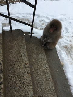 Step monkey