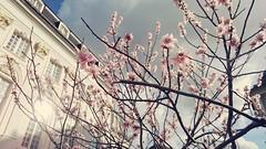 Spring feeling in Bonn, Germany