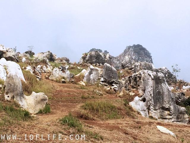 Stone garden 3