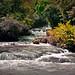 Y.S. Falls, Jamaica.