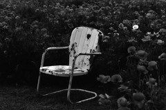 My Spring fewer. Pink poppy and Rusted metal chair