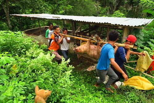 travel flores indonesia pig farm rustic pork moni guesthouse eastnusatenggara palmbungalow
