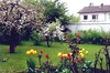 Helene Neumayer freut sich heute an ihrem Garten und erinnert sich dabei an die Banater Heimat (HB 2013)