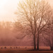 Misty morning (Explored) by PH∅T∅Matrix