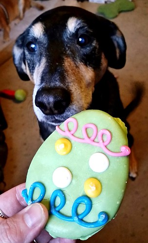 Easter Treats for the Dogs! #dogcookies #dogbakery #TheBarkery #easter2016 #easterdogs  #LapdogCreations ©LapdogCreations