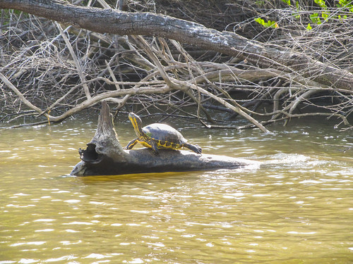 The New River: Mme la Tortue