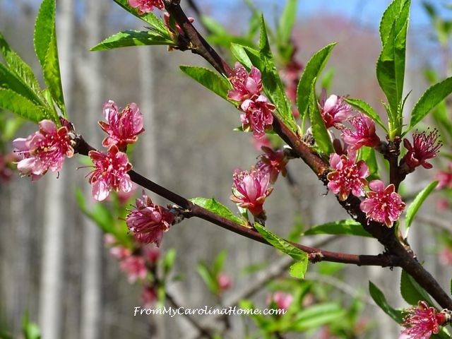 April peach 2