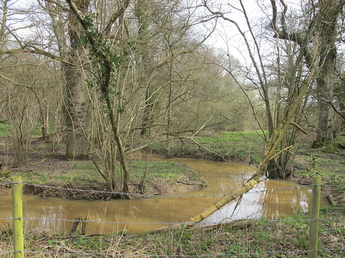 Stream in Claygate Copse, 1 day after Storm Katie had moved through