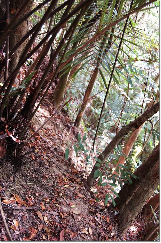 竹子赤山峭壁處
