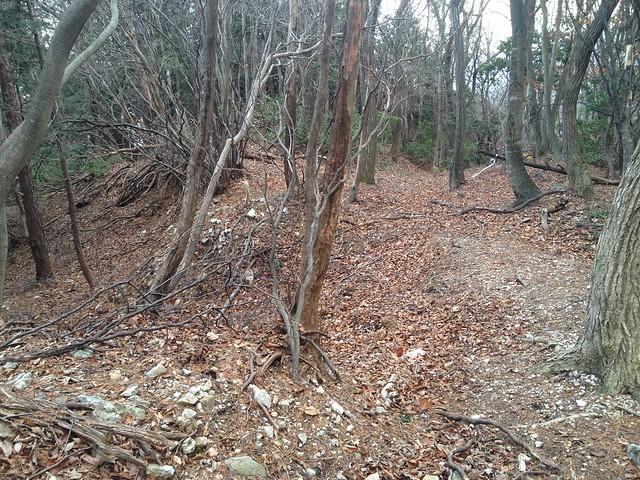 小島山 登山道 分岐