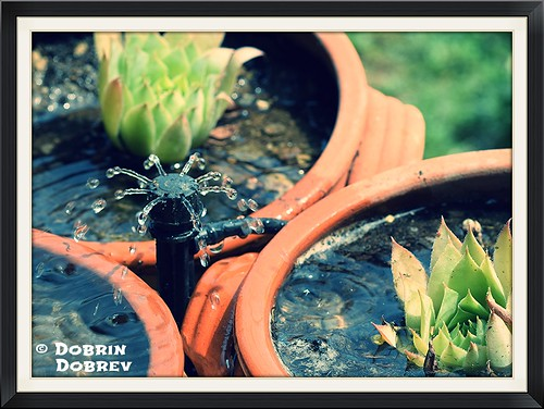 plant flower macro green nature water fountain up garden nikon close outdoor border bulgaria sprinkler villa d3300
