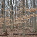 Carson Road Woods - Beech Forest 05 by Adventure George