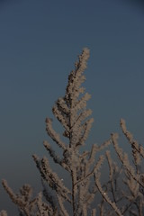 Ice-covered branches