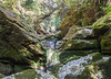 Cave Creek, Paparoa National Park
