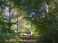 GOC Walthamstow to Stratford 125: Wick Wood, Hackney