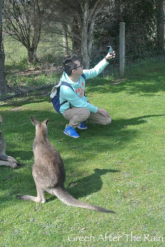 150911g Phillip Island Maru Koala and Animal Park _042