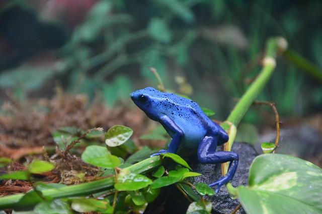 Poison Blue