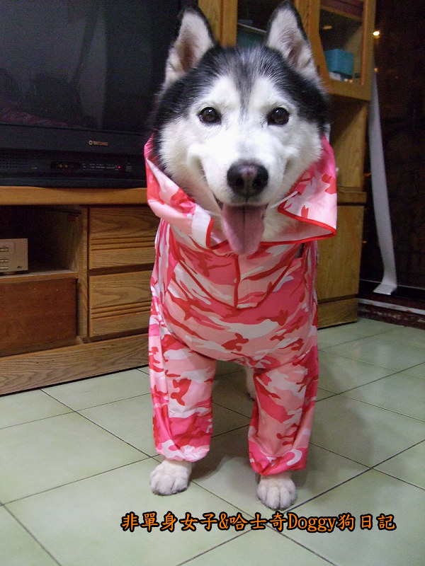 寵物雨衣迷彩服12