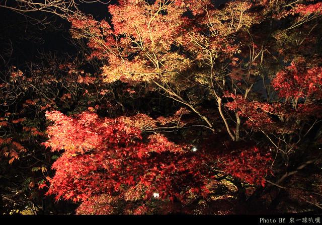京都-清水寺113