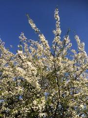 La primavera sboccia