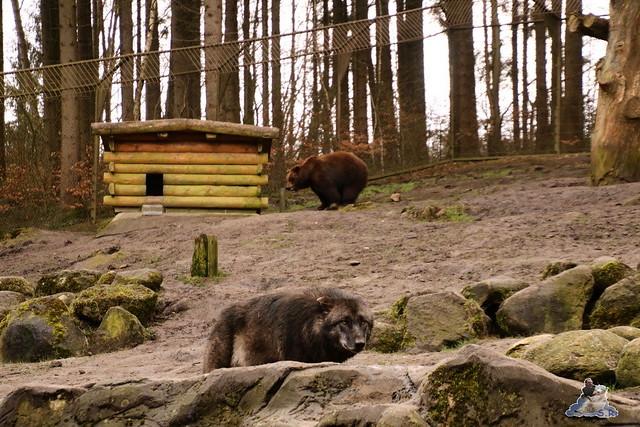 Wildpark Lüneburger Heide 31.03.2016  0047