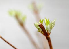 3/23/16 A New Leaf