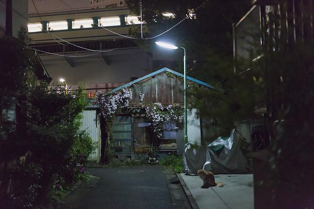 Chat de tokyo 13 / Tokyo de nuit 8