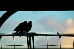 Birds at Eiffel Tower
