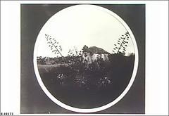 Gaffneys at Willunga, 1908. SLSA B49173