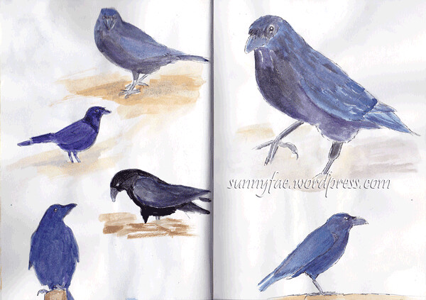 Sketched-Crows