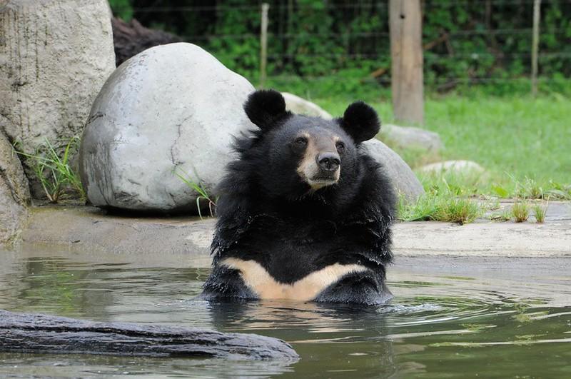 Jasper takes a bath