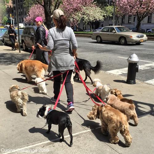 2016 04 21 050 Hundesitter CuCa