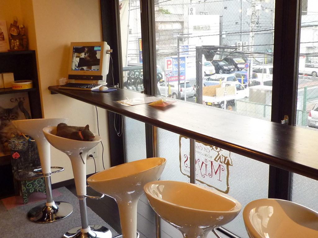Miysis Cat Cafe Kannai Yokohama