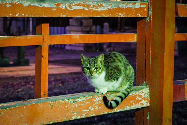 Today's Cat@2016-01-05