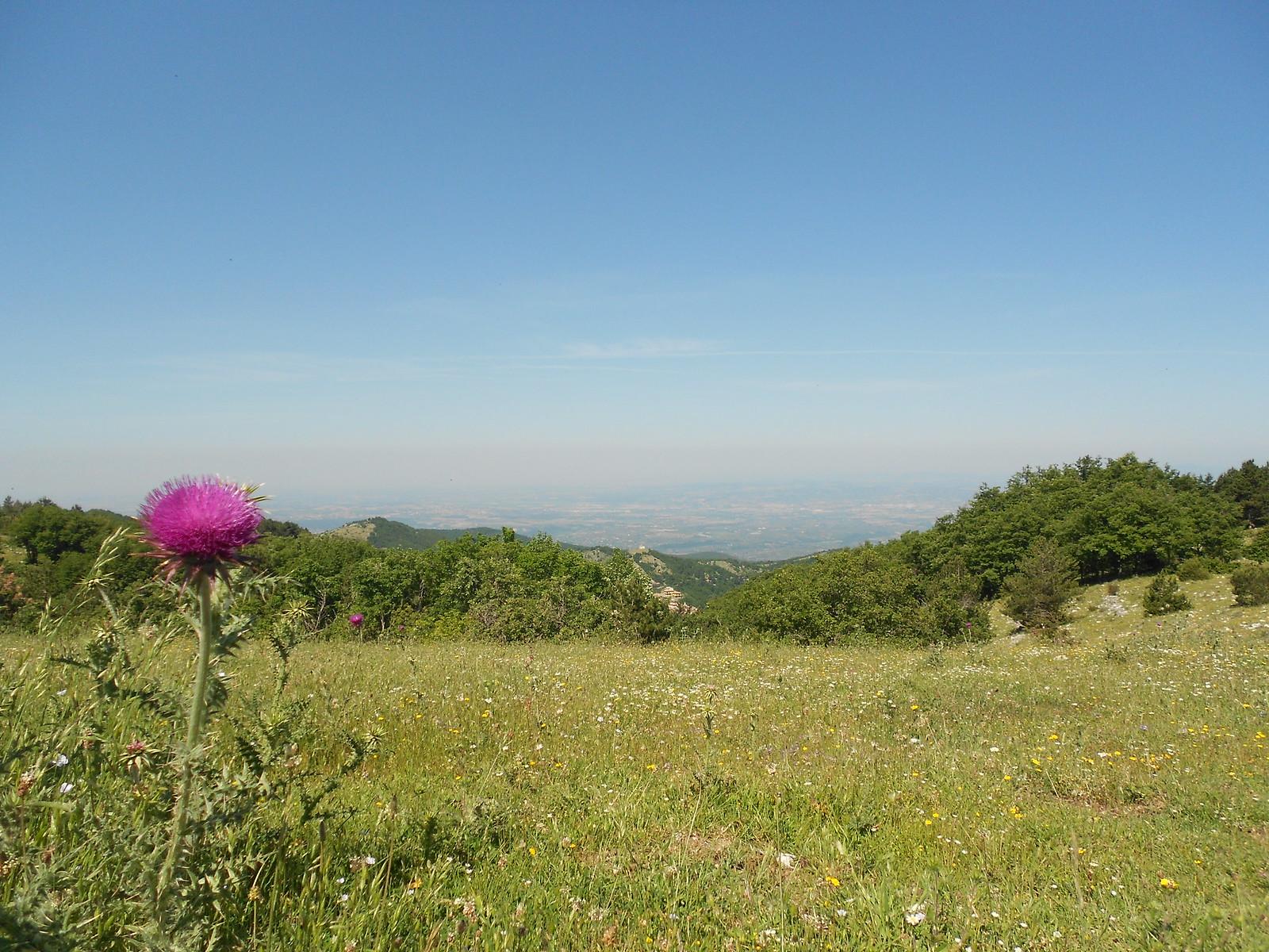 Cresta Pellecchia
